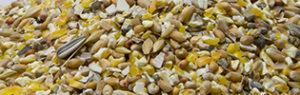 Grain-Casse-volailles-scar