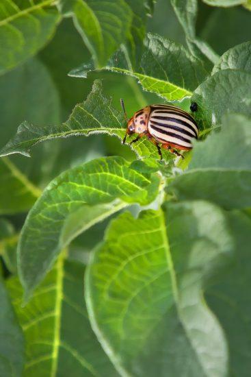 Protection des plantes